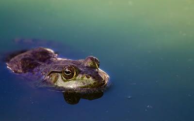 Big Fish, Small Pond